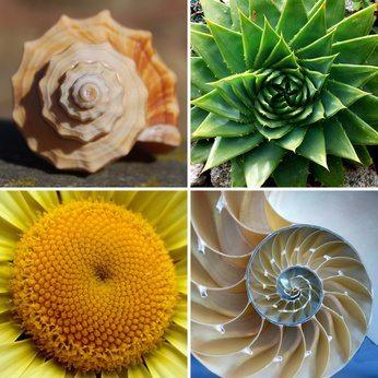 Kurz erklärt: Fibonacci Retracement Level