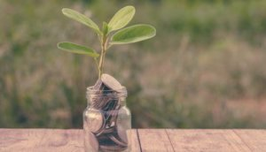 SoFi, Plant Growing In Savings Coins - Investment And Interest Concept
