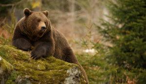 Bitcoin Blase bearish