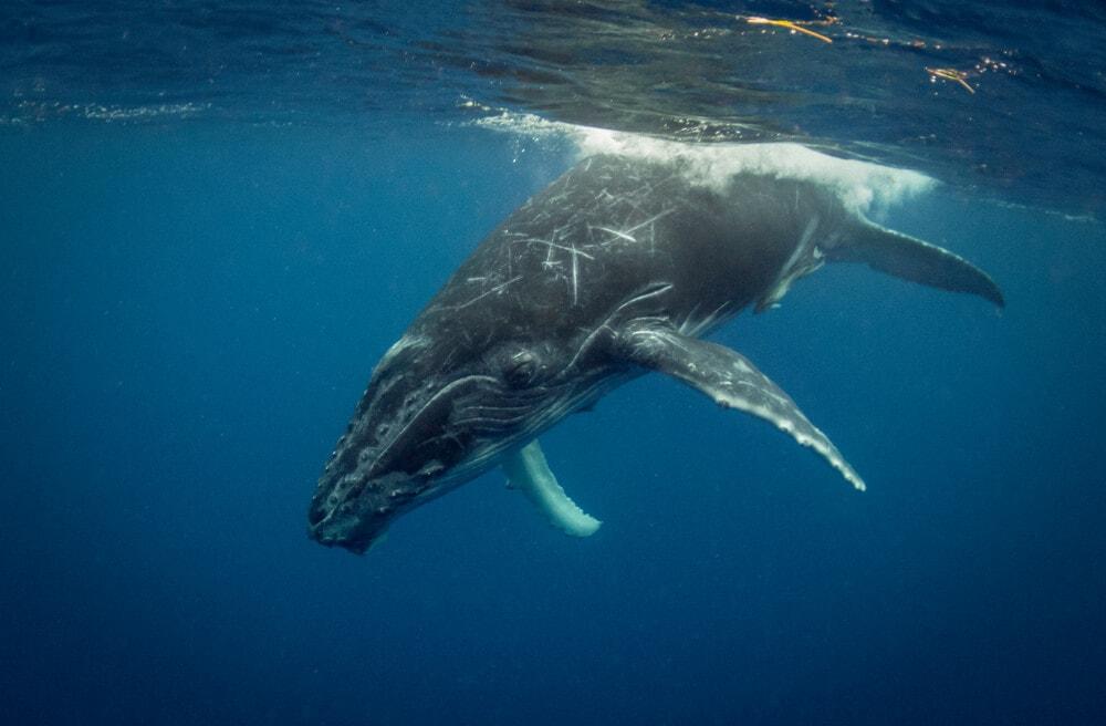 Whale Watching: Wer bewegt 66.000 Bitcoin?