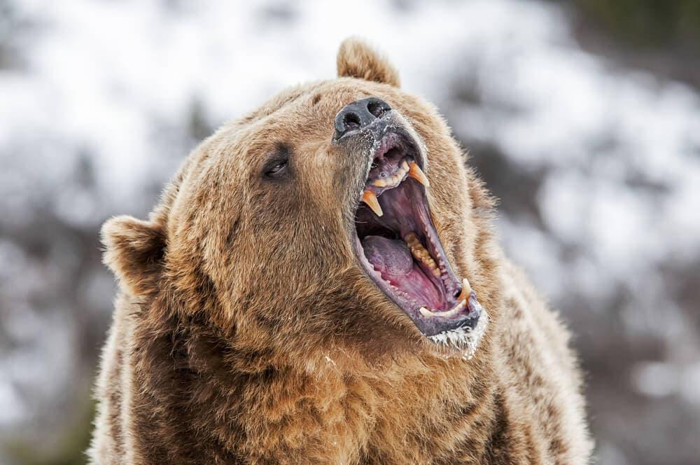 Der Bärenmarkt in Bildern: Rückblick auf die Bitcoin-Kursentwicklungen von 2018