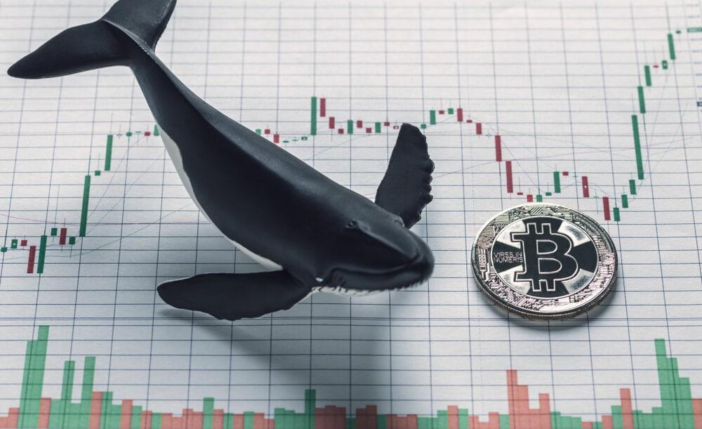 Bitcoin-Marktsentiment: Volatilität erreicht neue Höhen