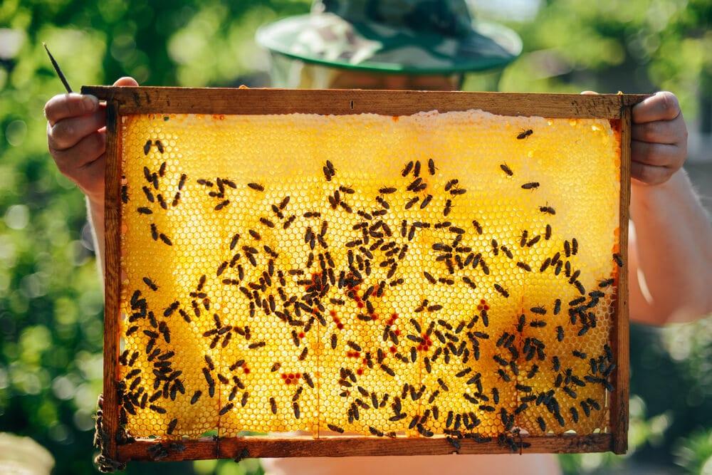 BeeCoin: Berlin Art Week verbindet Bienen und Blockchain