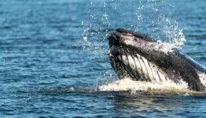 Manipulieren Wale den Bitcoin-Kurs? (Symbolbild)
