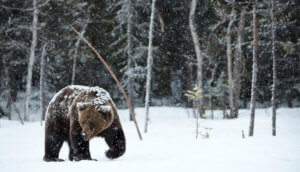 Bitcoin-Kurs-Sturz: Gründe für den Bärenmarkt