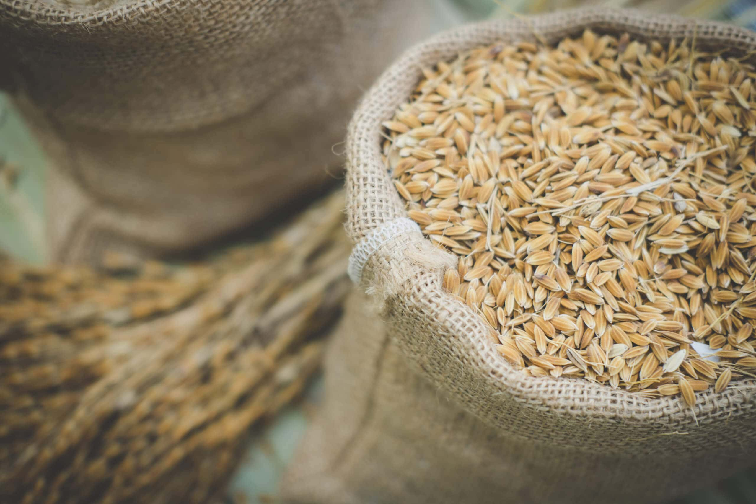Reis Supply Chain