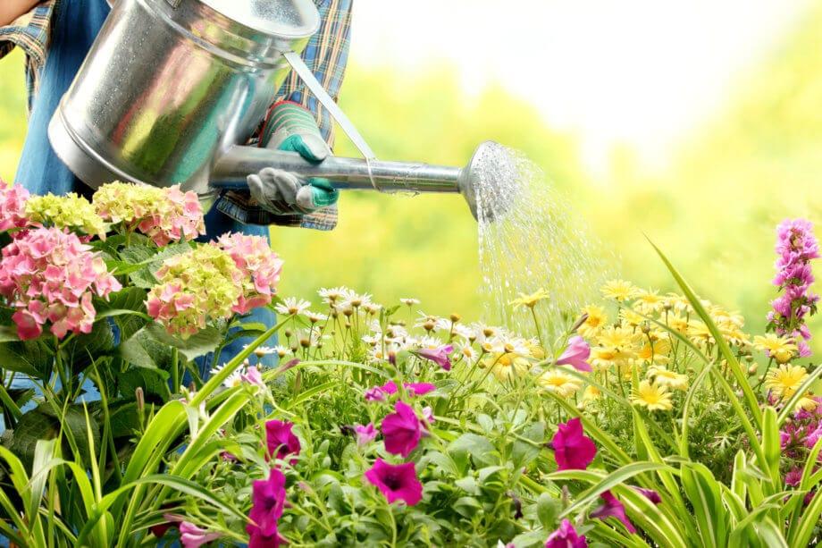 Ein farbenprächtiges Blumenbeet wird gegossen (Symbolbild)