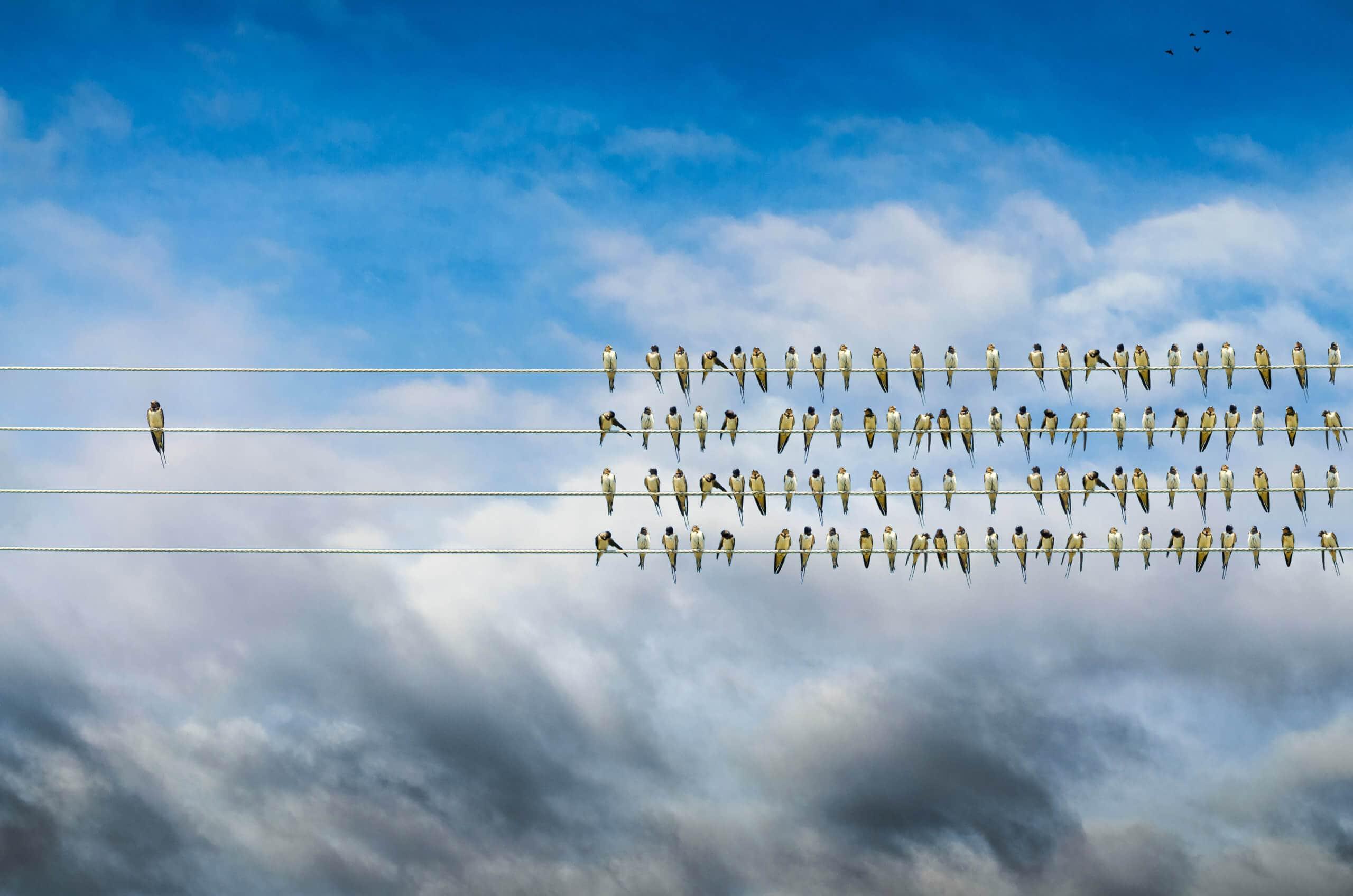 Vögel auf der Stromleitung