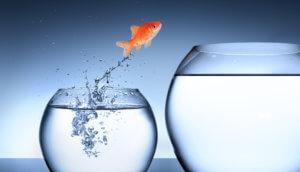Weltpremiere: Wird RICO den Krypto-Investment-Markt revolutionieren?