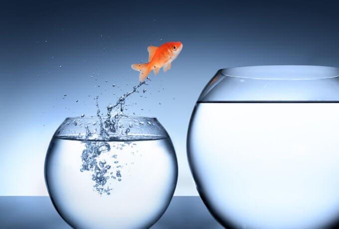 ein goldfisch, der von einem kleinen glas in ein größeres springt auf bläulichem hintergrund