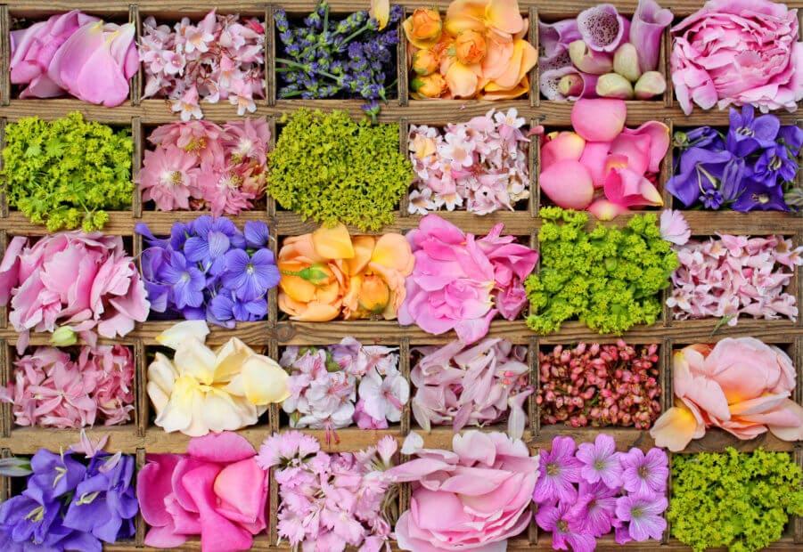 Vielfalt statt Einfalt: verschiedene Blüten