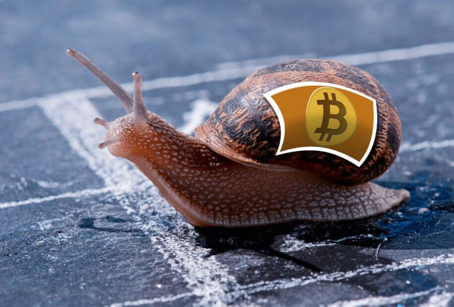Schnecke mit Bitcoin-Logo auf dem Haus
