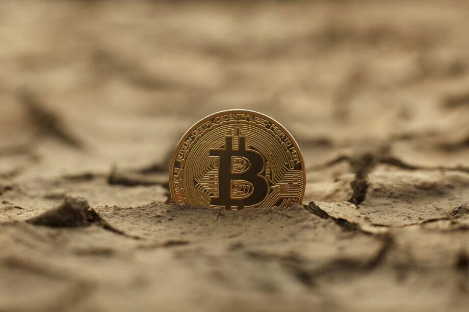 Eine Bitcoin-Münze sprießt aus vertrockneter Erde