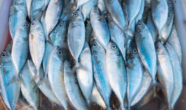 Mehrere gefangene Fische