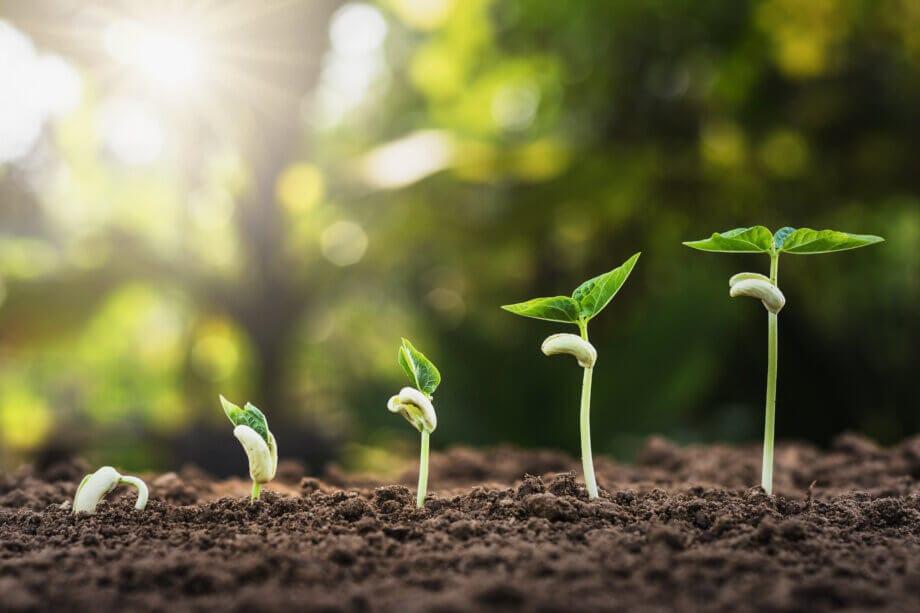 fünf pflanzen, die langsam wachsen