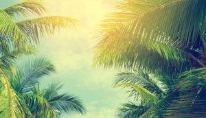 Sonne scheint durch palmen
