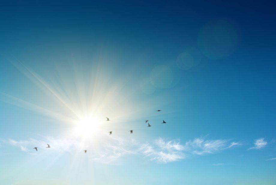 Die Sonne mit Vögels, die rumfliegen