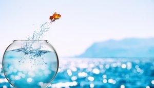ein goldfisch, der aus einem glas springt