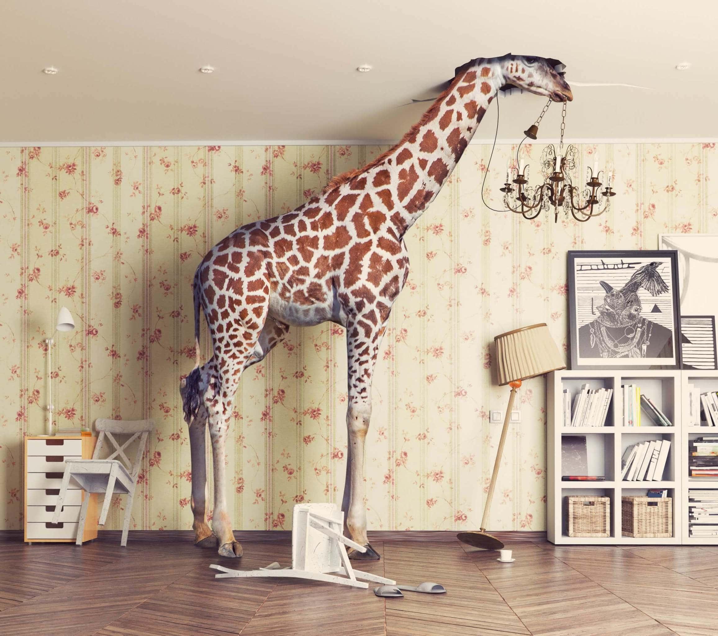 giraffe-stößt-mit-dem-kopf-durch-die-decke