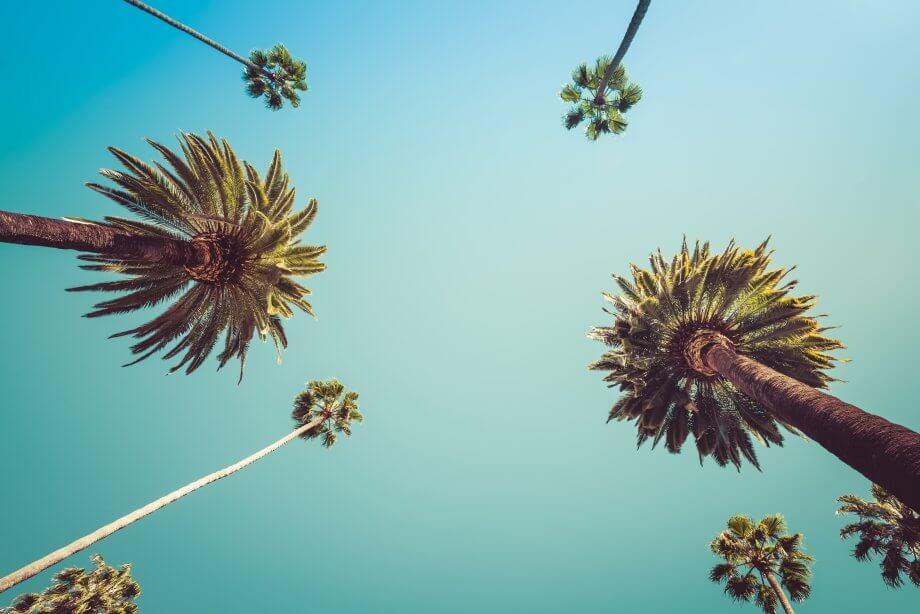 mehrere palmen von unten und ein türkiser himmel