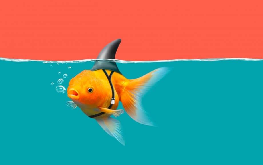 Goldfisch mit Haifischflossen schwimmen in grünem Wasser und rotem Himmel, Goldfisch mit Haifischflossen