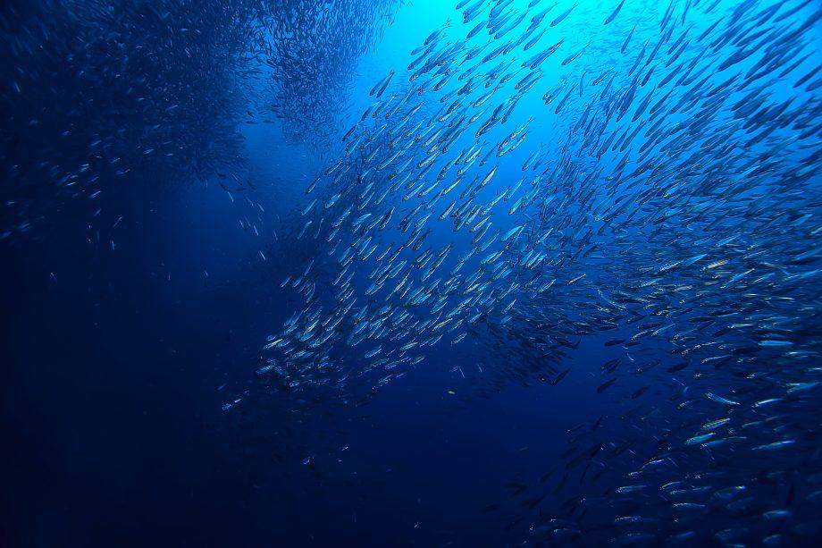 Muschel unter Wasser / Meeresökosystem, große Fischschule auf blauem Hintergrund, abstrakter Fisch lebendig K