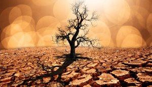 Ein vertrockneter Baum auf vertrocknetem Boden.