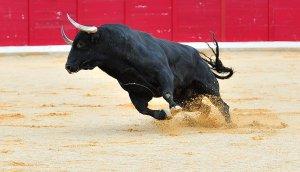 Eine Stier in einer Stierkampfarena