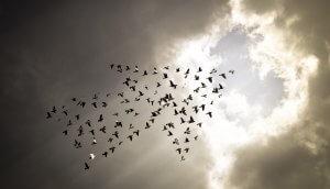 mehrere vögel, die in pfeilform richtung himmel fliegen