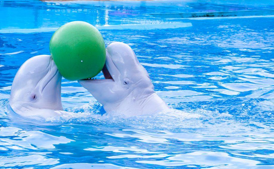 Wale spielen mit einem Ball