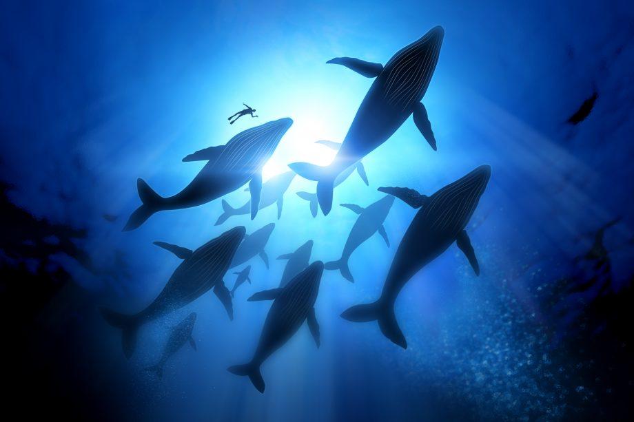 Wale schwimmen im Meer
