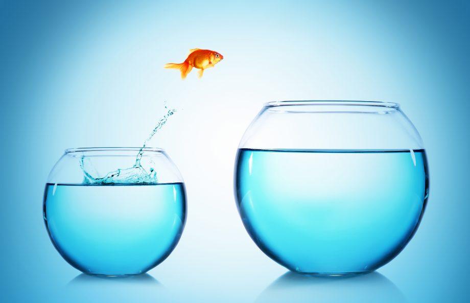 Ein Goldfisch springt aus einem kleinen in ein größeres Goldfischglas