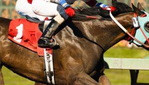 Ein Rennpferd mit Jockey (Nahaufnahme)