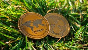 Zwei Ripple-Münzen (XRP) im Gras