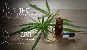 Sturkturformeln von THC und CBD vor Cannabis-Blättern und Phiole