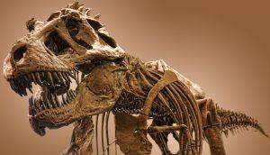 Auf dem Bild ist ein Skelett von einem Dinosaurier, einem T-Rex, zu sehen.