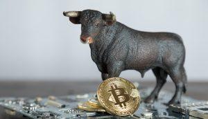 Bitcoin-Münze und kleine Bärenfigur auf einer Platine