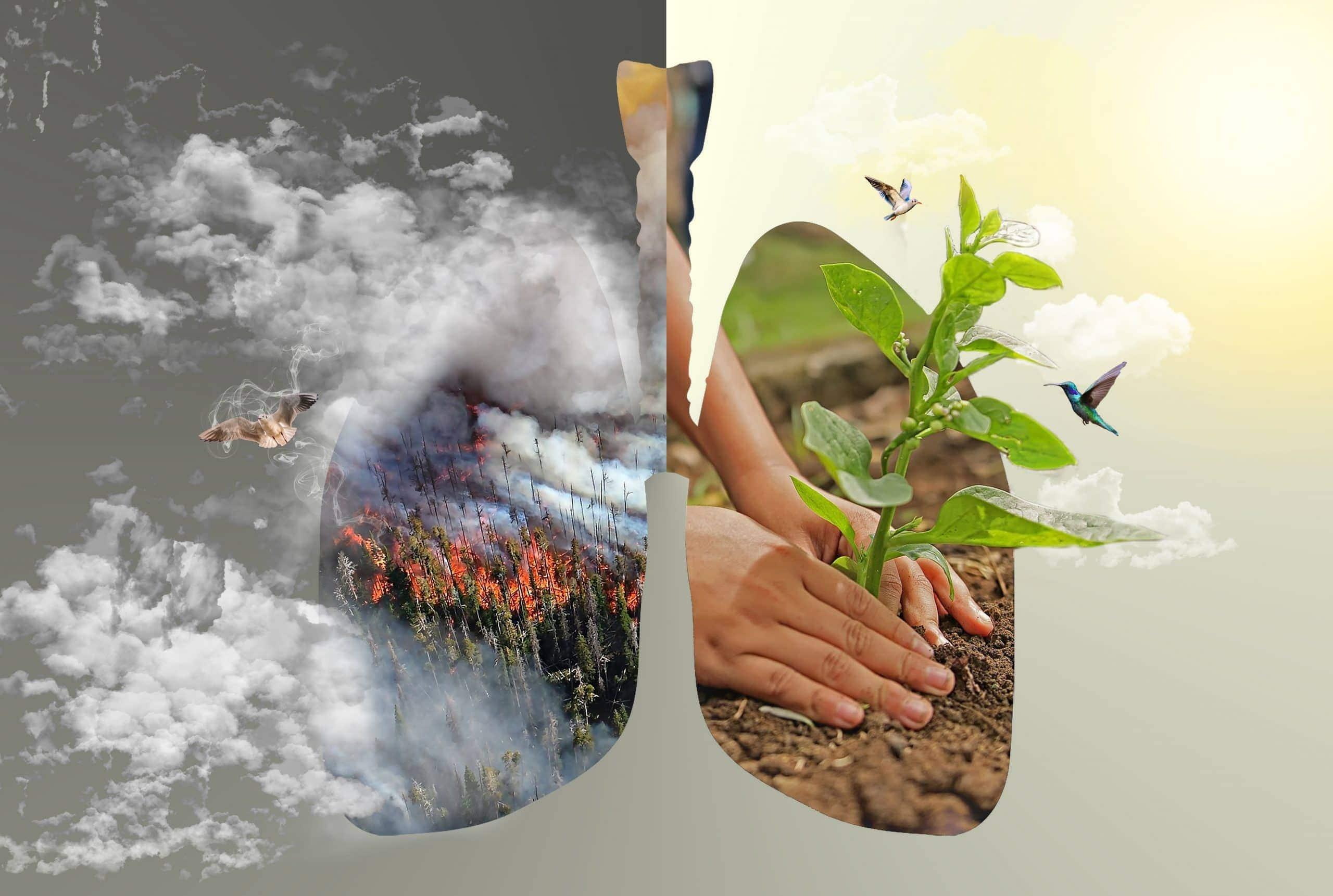 """Symbolbild für den Regenwald, die """"grüne Lunge"""" der Erde"""