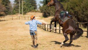 Mann zähmt wildes Pferd