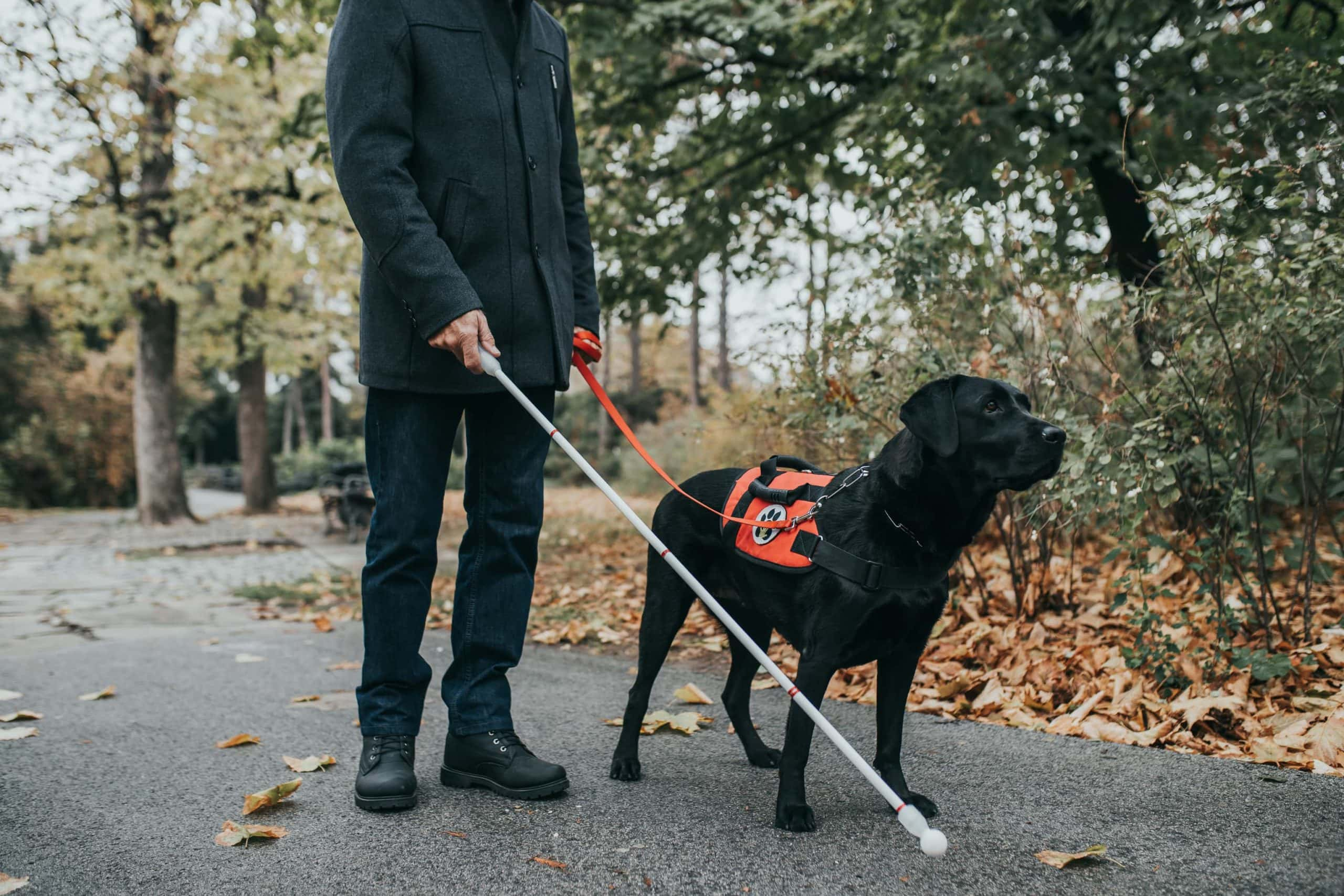 Blindenführhund führt einen Blinden