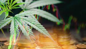 Cannabis Coin Chart