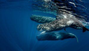 Bitcoin-Wale auf der Pirsch.