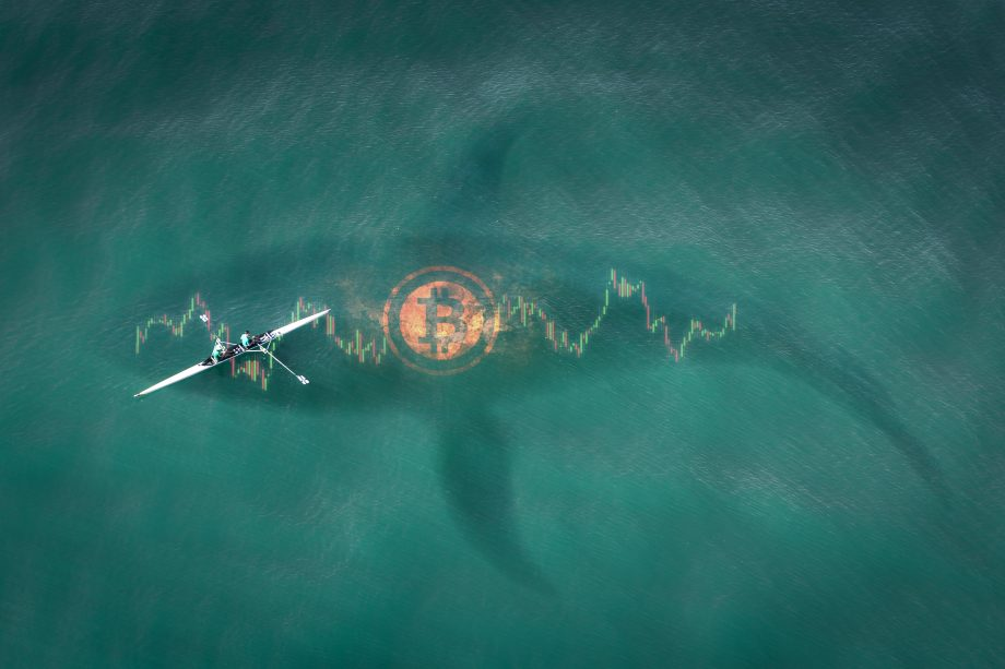 Umriss eines Wals unter einer Bitcoin-Münze, daneben ein Kanufahrer