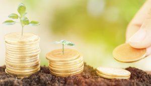 Pflanzen Münzen Wachstum