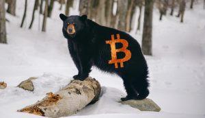 Bär mit Bitcoin-Logo steht auf einer Schneefläche