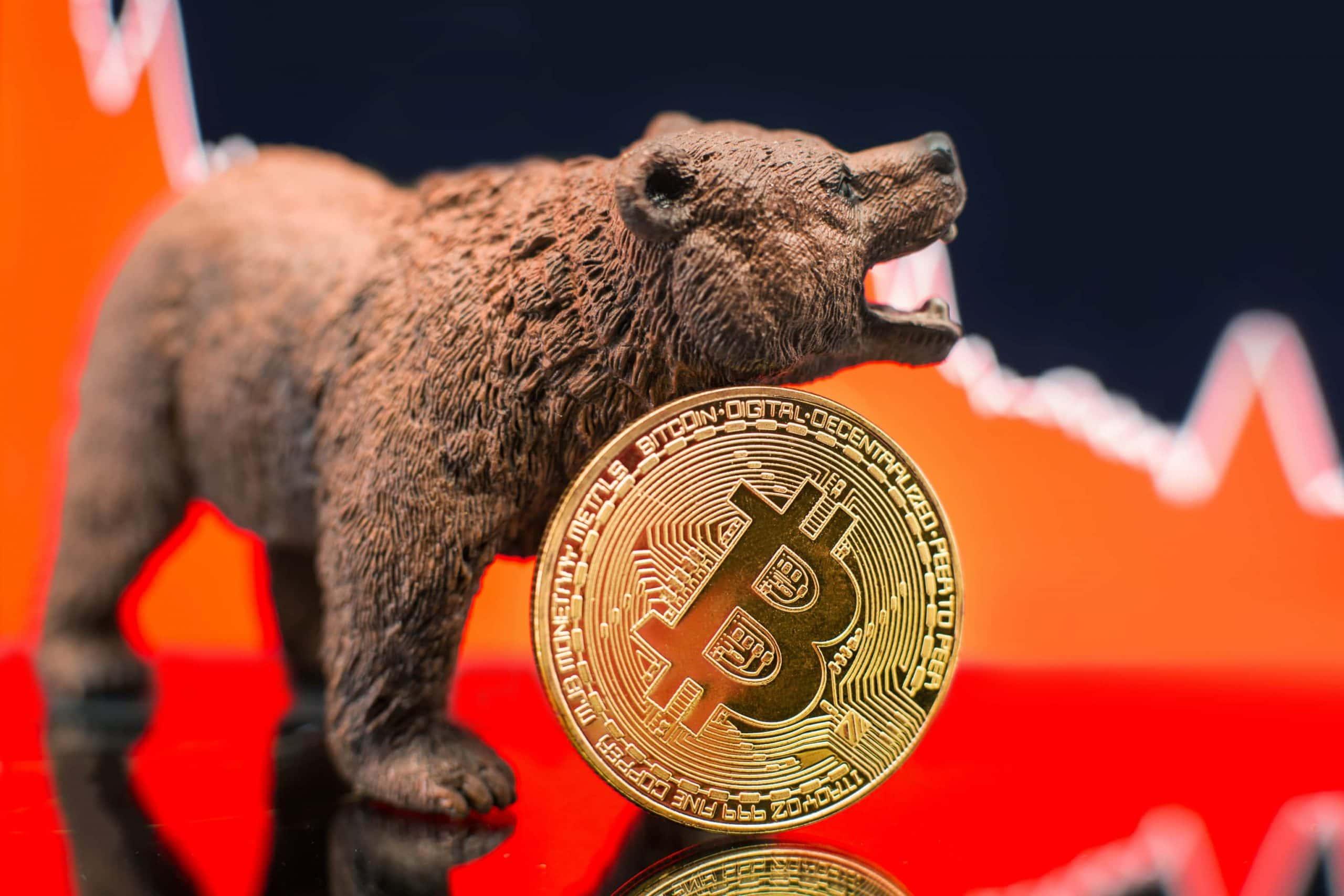 Bär und Bitcoin-Münze vor einem Chart
