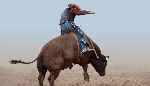 Reiter auf einem Bullen