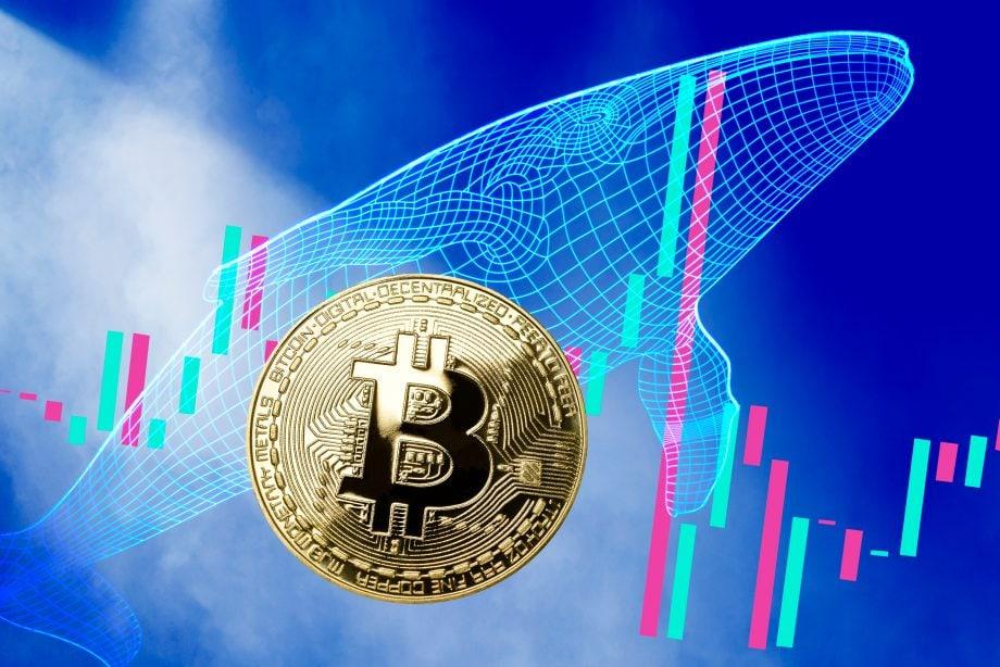Bitcoin-Münze, Walsilhouette und Kurs-Kerzen (Grafik)