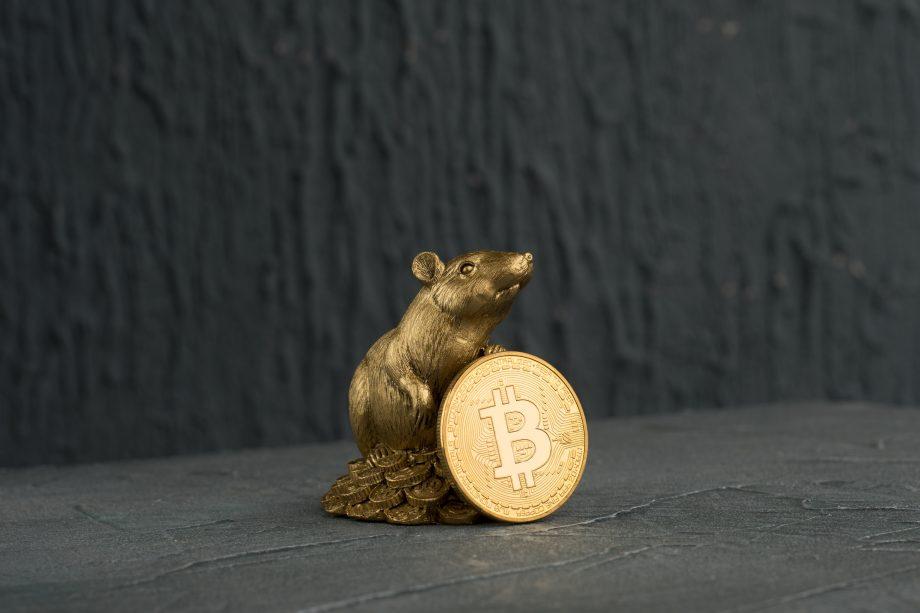 Ratte hält Bitcoin-Münze
