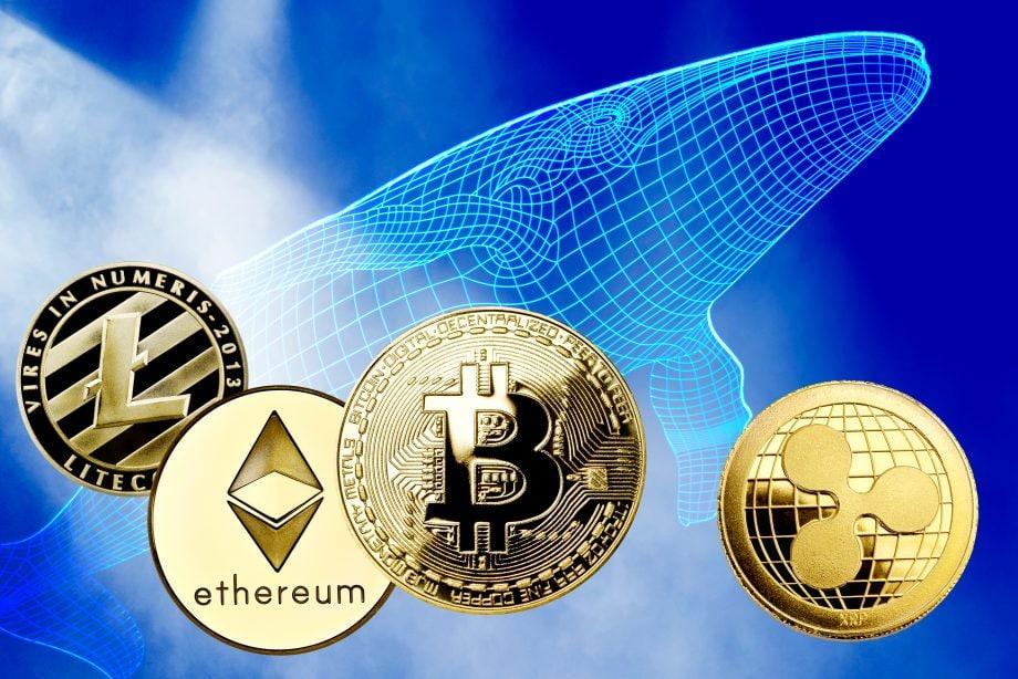 Litecoin, Ethereum, Bitcoin und Ripple. Dahinter ist ein Wal zu sehen.